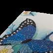 Blue Butterfly, 10x15cm Crystal Art Card | Bild 3
