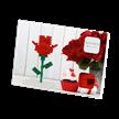 Blume / flower | Bild 3