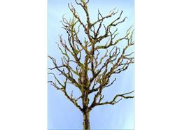 Deko-Ästebaum grün-braun-bemoost H135 B50cm