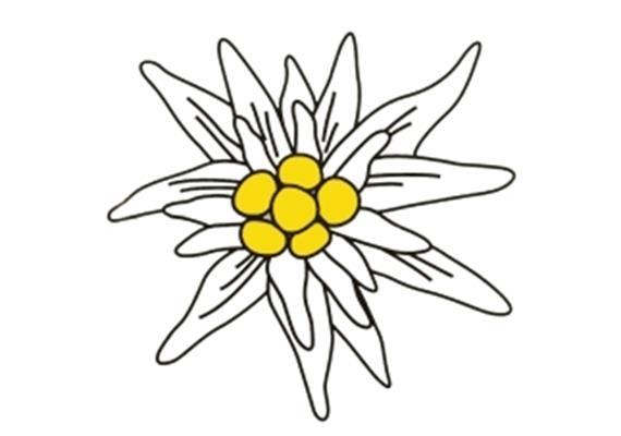 Kleber Edelweiss S 9cm, wetter,- lichtbeständig