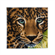 Leopard, 30x30cm Crystal Art Kit