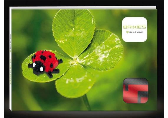 Marienkäfer / ladybird