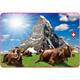 SLA Bild Matterhorn/Kühe