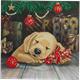 Sleepy Puppy, 18x18cm Crystal Art Card