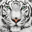 White Tiger, 30x30cm Crystal Art Kit | Bild 4