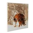 Winter Tigers, 40x50cm Crystal Art Kit   Bild 2