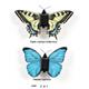 2in1 Schmetterling Bausatz