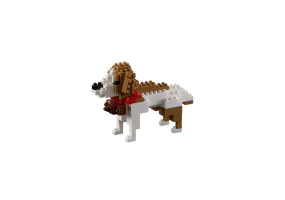 Bernhardiner Hund / dog st. bernhard