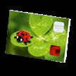Marienkäfer / ladybird | Bild 2