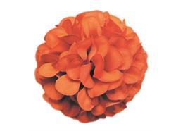 Tangerine, Cute Camelias Forever Flowerz -Makes 30
