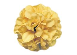 Yellow, Cute Camelias Forever Flowerz - Makes 30